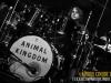 animal-kingdom05