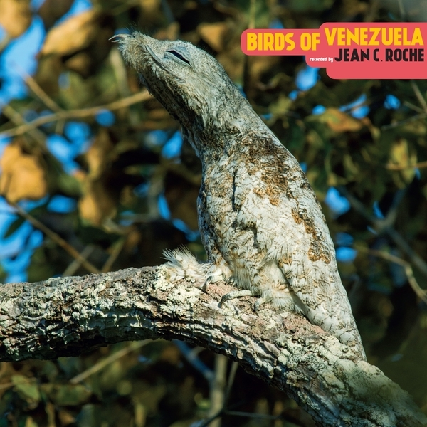 Jean C. Roche – Birds Of Venezuela